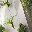 Rideau Végétal Airplant