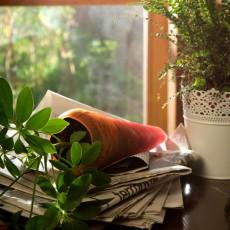 Carotte à Planter Jardinchic en intérieur
