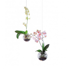 Flying Orchids 16cm Jardinchic
