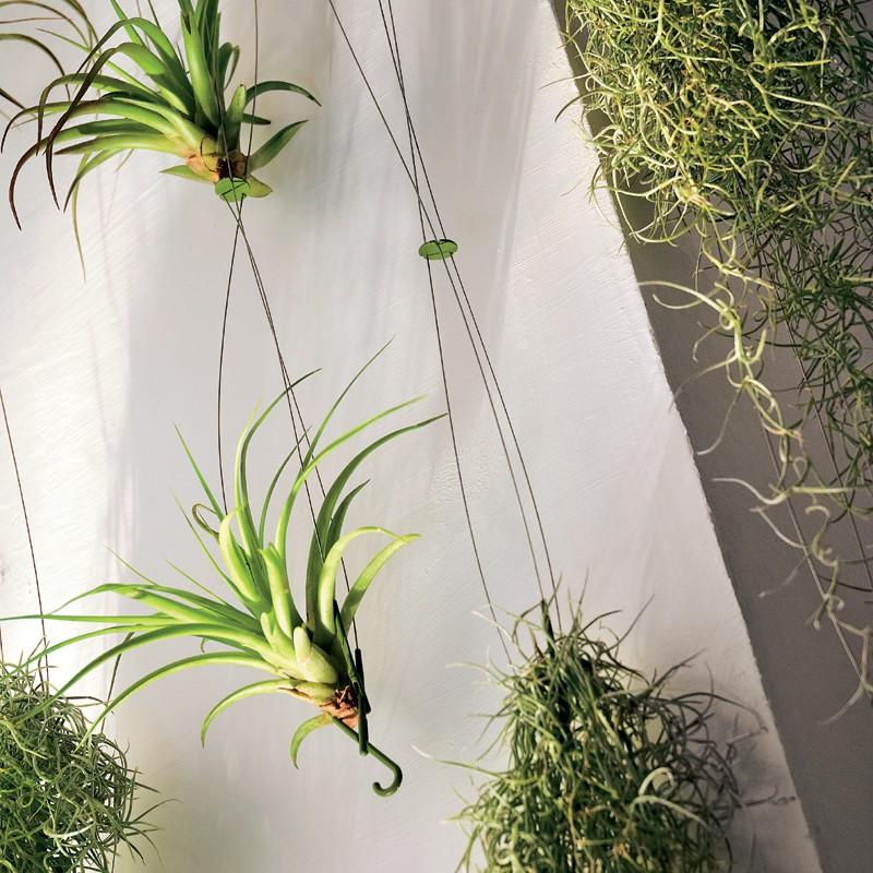 Rideau Végétal Airplant Teracrea JardinChic