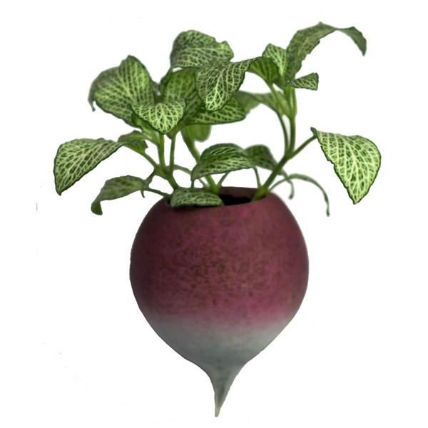 Radis à Planter - JardinChic