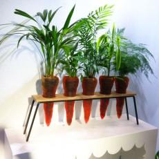 Lot de 5 Carottes à Planter Jardinchic