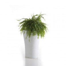 pot-70-bones-vondom-jardinchic