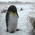Statue Pingouin