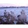 Statues Brebis, Moutons, Béliers et Agneaux Blancs TexArtes JardinChic