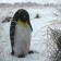 Statue Pingouin TexArtes Jardinchic